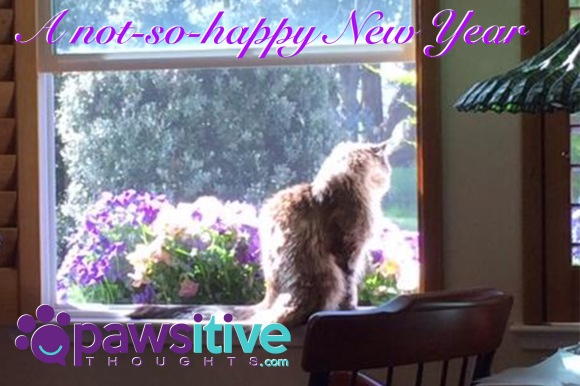 not-so-happy-new-year