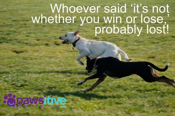 63219317 - dogs running