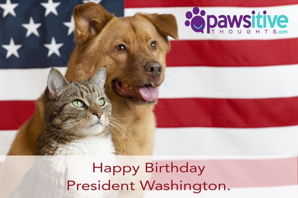 4904845 - proud american pets with us flag in as background. focus on cat