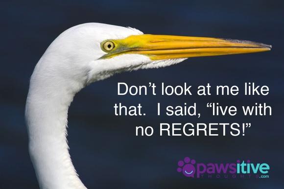 39230424 - portrait of a great egret (ardea alba) near clearwater florida