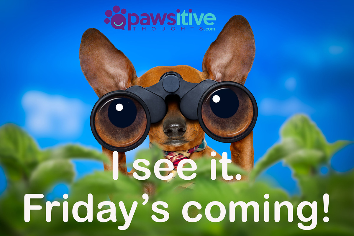 Image result for i see friday coming